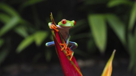Costa Rica, la fièvre verte par Alain Basset
